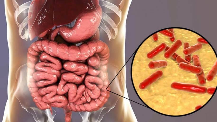 O Que São Probióticos e Quais os seus Benefícios para a Saúde